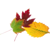autumn leaves - Plantas -