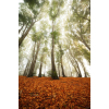 autumn photo - Uncategorized -