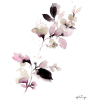 b1691c94512595ce6 - Plants -