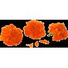 back - Plants -