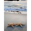 beach - Articoli -