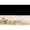 beach - Illustrations -