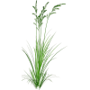 beach - Plants -