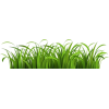 beach grass - Plants -