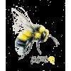 bee - Uncategorized -