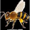 bees - Animals -