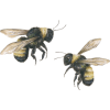 bees - Zwierzęta -