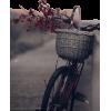 bicycle flowers photo - Uncategorized -