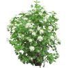 biljka - Rośliny -