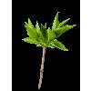 Biljka - Piante -