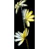 Biljke - Biljke -