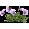 Biljke - Piante -