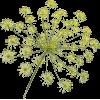 Biljke Plants Green - Plants -