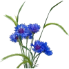 Biljke Plants Blue - 植物 -