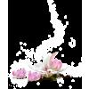 biljke - Plantas -