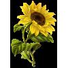 biljke - 植物 -