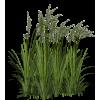 Biljke - Plants -