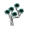 Biljke - Растения -