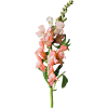 Biljke - Rośliny -