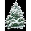 Pine - Plants -