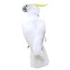 bird - Tiere -