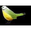 Bird - Животные -