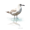 bird - Animali -