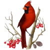 bird - Životinje -