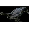 bird - Items -