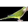 bird - Priroda -