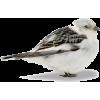 bird - Resto -