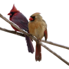 birds - Items -