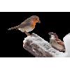 birds - Articoli -