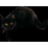 black cat - Items -