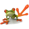 Frog - Animals -