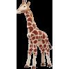 Giraffe - Animals -