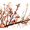 Blossom Plants Pink - Plants -