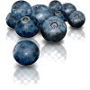 blueberry - Uncategorized -