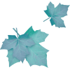 blue leaves - Plantas -