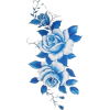 blue roses - Illustrations -