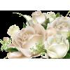 blues roses - Resto -