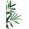 border palm plant stems - Rośliny -