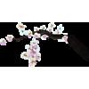 Branch - Ilustracije -