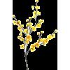 branche - Растения -
