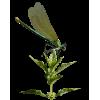 bugs - Životinje -