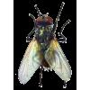 bugs - Animals -