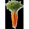 bundle of carrots  - Warzywa -