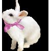 Bunny Animals White - Animales -