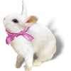 Bunny Animals White - Animals -
