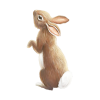 bunny - Items -